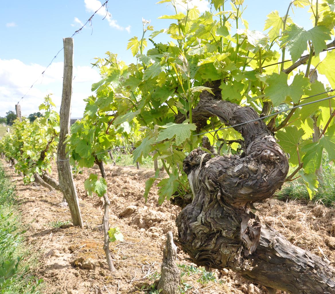Vins blancs de Gascogne Tariquet